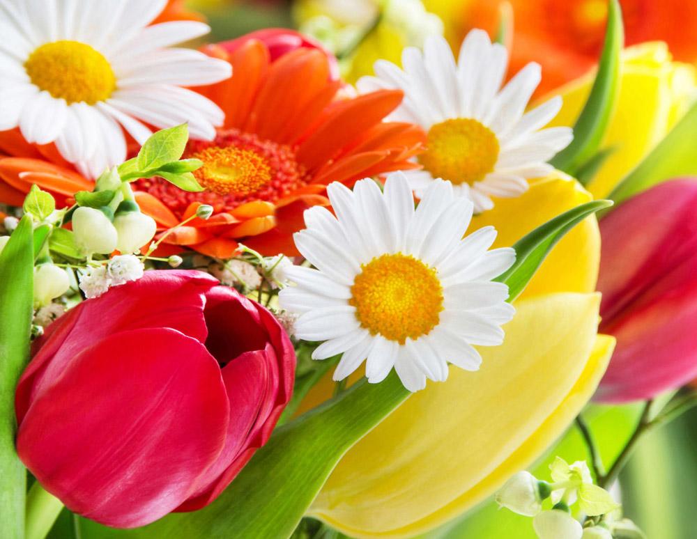 Katjas Blumenwelt